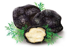 Mushroom black truffle Stock Photo
