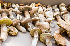 Mushroom boletus detail Royalty Free Stock Images