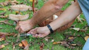 Mushroom boletus edulis stock video footage