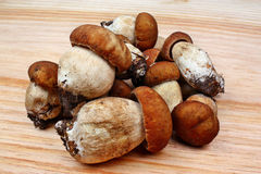 Mushroom boletus Royalty Free Stock Images