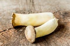 Mushroom Boletus over Wooden Background. Stock Photography