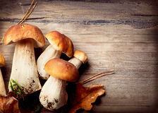 Mushroom Boletus. Over Wooden Background. Autumn Cep Mushrooms Stock Photos