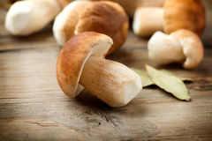 Mushroom Boletus. Over Wooden Background. Autumn Cep Mushrooms Stock Photo