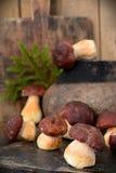 Mushroom Boletus over Wooden Background Stock Photos