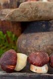 Mushroom Boletus over Wooden Background Royalty Free Stock Photo