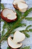 Mushroom Boletus over Wooden Background Stock Photo