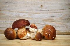 Mushroom Boletus over Wooden Background. Autumn Stock Image