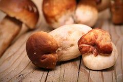 Mushroom Boletus over Wooden Background. Autumn Royalty Free Stock Photo