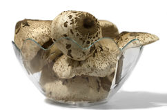 Mushroom bowl Stock Photo