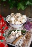 Mushroom. Bowl of a mushroom Royalty Free Stock Photos