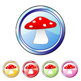 Mushroom buttons Stock Photo