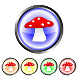 Mushroom buttons Royalty Free Stock Image