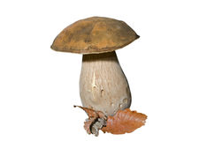 Mushroom (Cape) 7 Stock Photos