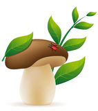 Mushroom cep vector illustration Stock Photo