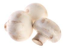 Mushroom champignon Stock Image