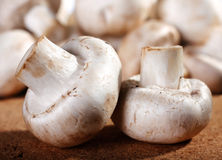 Mushroom champignon Royalty Free Stock Photo