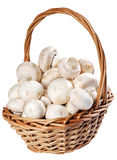 Mushroom champignon. Group isolated on white background royalty free stock photos