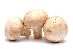 Mushroom a champignon Royalty Free Stock Image