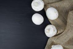 Mushroom champignon on dark background.  stock image