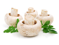 Mushroom champignon fruits. With green parsley leaves isolated on white background stock image