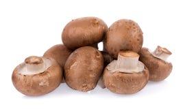 Mushroom champignon isolated on white background. Closeup Mushroom champignon isolated on white background stock photos