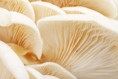 Mushroom close-up Royalty Free Stock Images