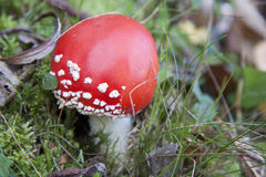 Mushroom close up Royalty Free Stock Images