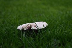 Mushroom. Close up Royalty Free Stock Photography