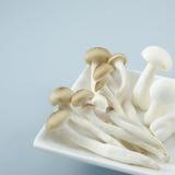 Mushroom close up Stock Photos