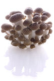 Mushroom clump. On a white reflective background royalty free stock photography
