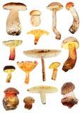 Mushroom collection stock photo