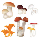 Mushroom collection isolated on white background. Stock Photos
