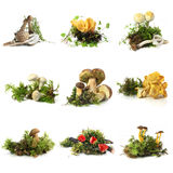 Mushroom collection Royalty Free Stock Image