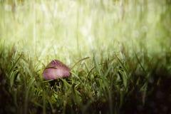 Mushroom. Colorful mushroom in green grass Royalty Free Stock Images