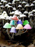 Mushroom Colors Royalty Free Stock Photography