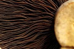 Mushroom Concept Series. Abstract close up Mushroom image series Royalty Free Stock Images