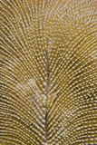 Mushroom coral macro. Royalty Free Stock Images