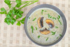 Mushroom cream soup. Homemade mushroom cream soup with parsley Stock Images