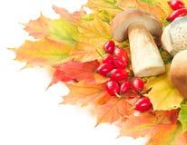 Mushroom crop on autumn leaves Stock Photos
