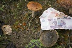 Mushroom cultivation the money next Finance and banking concept. Mushroom cultivation the money next Finance and banking concept Royalty Free Stock Photography