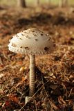 Mushroom in the dark forest Stock Photos
