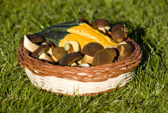 Mushroom decoration. Autumn decoration with pumpkin and mushroom Royalty Free Stock Images