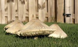 Mushroom Detail Stock Image