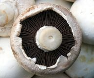 Mushroom Detail. Button mushroom detail placed on a background of mushrooms Royalty Free Stock Photography
