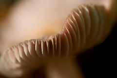 Mushroom detail Royalty Free Stock Images