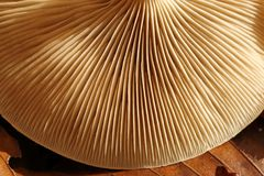 Mushroom. Royalty Free Stock Photos