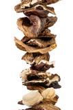 Mushroom dried Stock Image