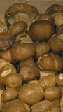 Mushroom. Exposition of mushroom raw type Stock Photography