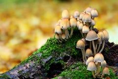 Mushroom family Royalty Free Stock Photo