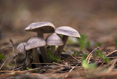 Mushroom family Royalty Free Stock Images